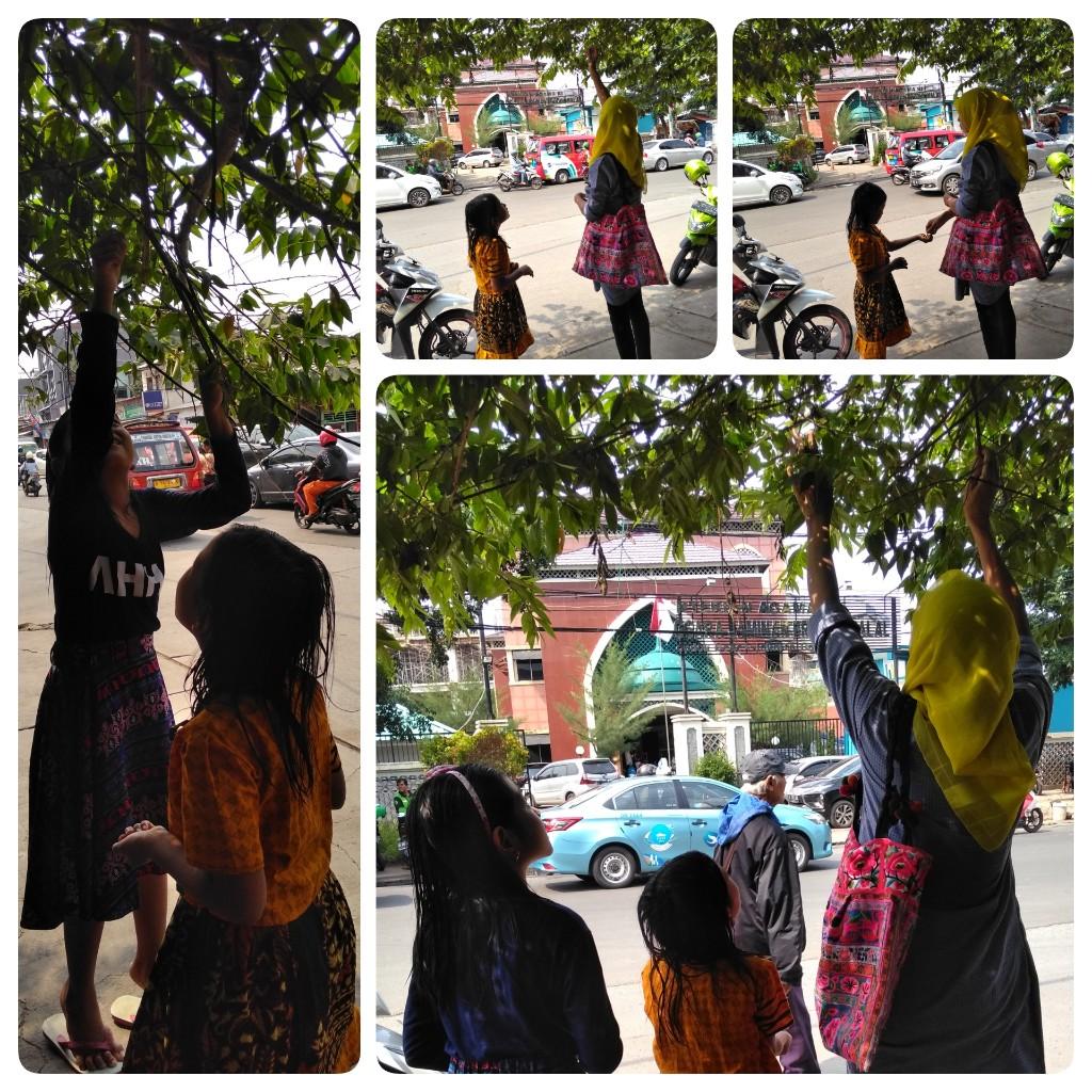 Memetik pohon kersen di depan Terminal Pinangranti Jakarta Timur