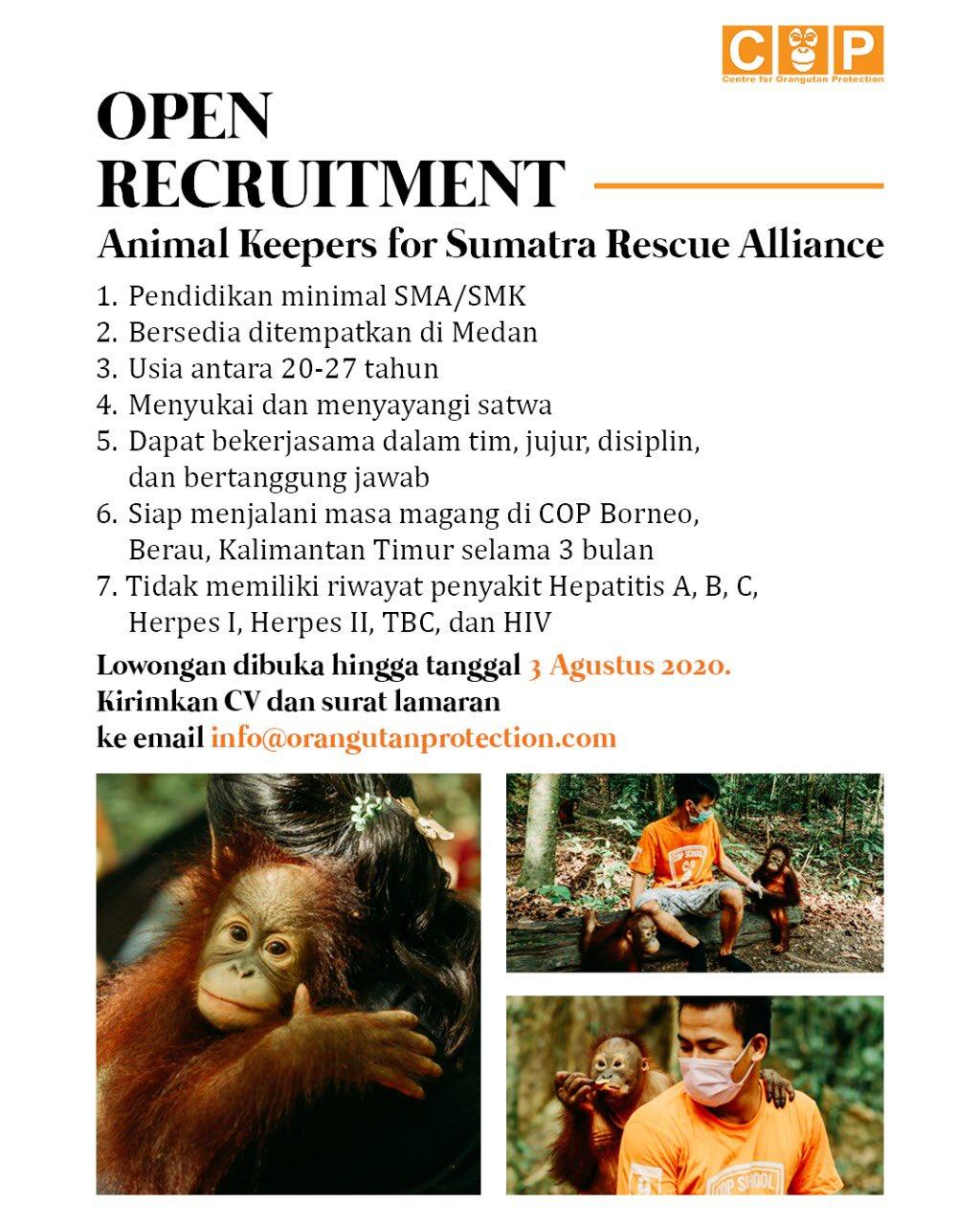 Lowongan perawat orangutan