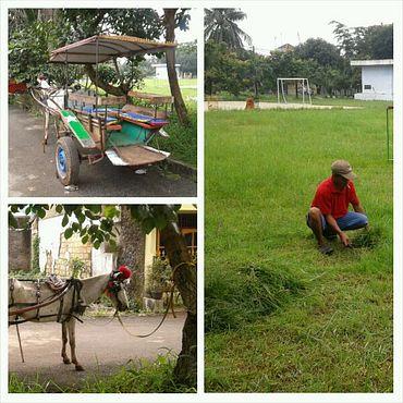 pemilik delman mencari rumput untuk pakan kuda di lapangan kompleks
