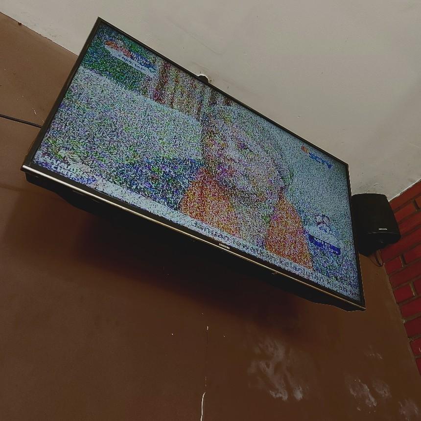 TV dirubung semut